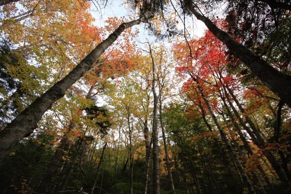 Autumn in Acadia National Park, Maine