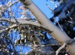 1-21 snow onMDI17